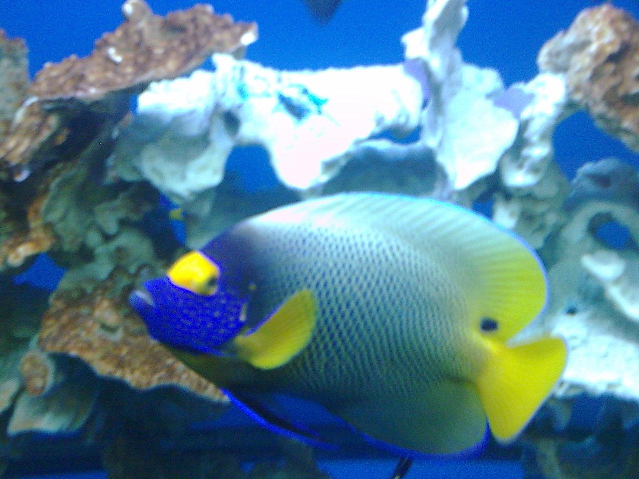 壁纸 动物 海底 海底世界 海洋馆 水族馆 鱼 鱼类 1280_960