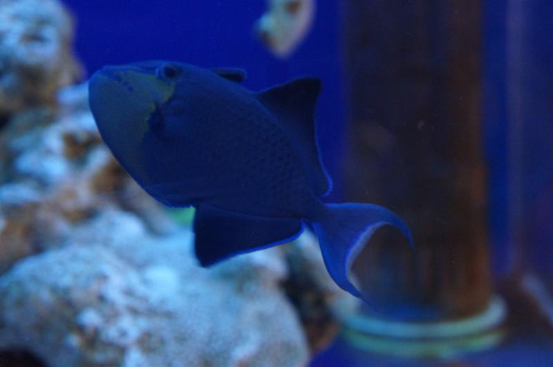 壁纸 动物 海底 海底世界 海洋馆 水族馆 鱼 鱼类 800_531