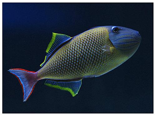 鱼网纹花边素材