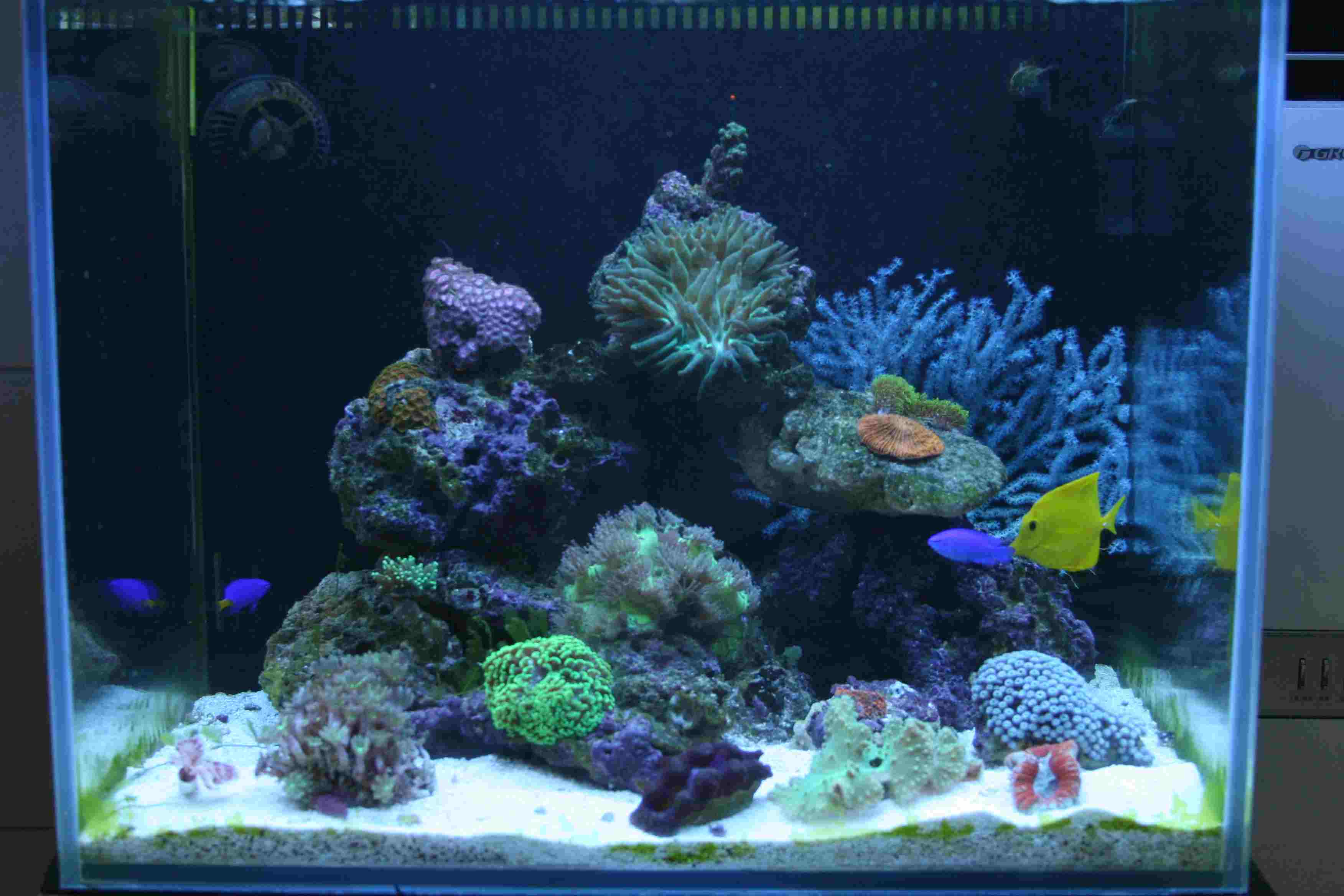 壁纸 海底 海底世界 海洋馆 水草 水生植物 水族馆 3504_2336