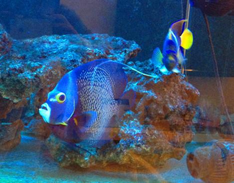 壁纸 动物 海底 海底世界 海洋馆 水族馆 鱼 鱼类 469_367
