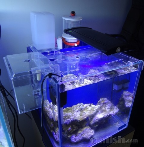 塑料水桶做鱼缸图片