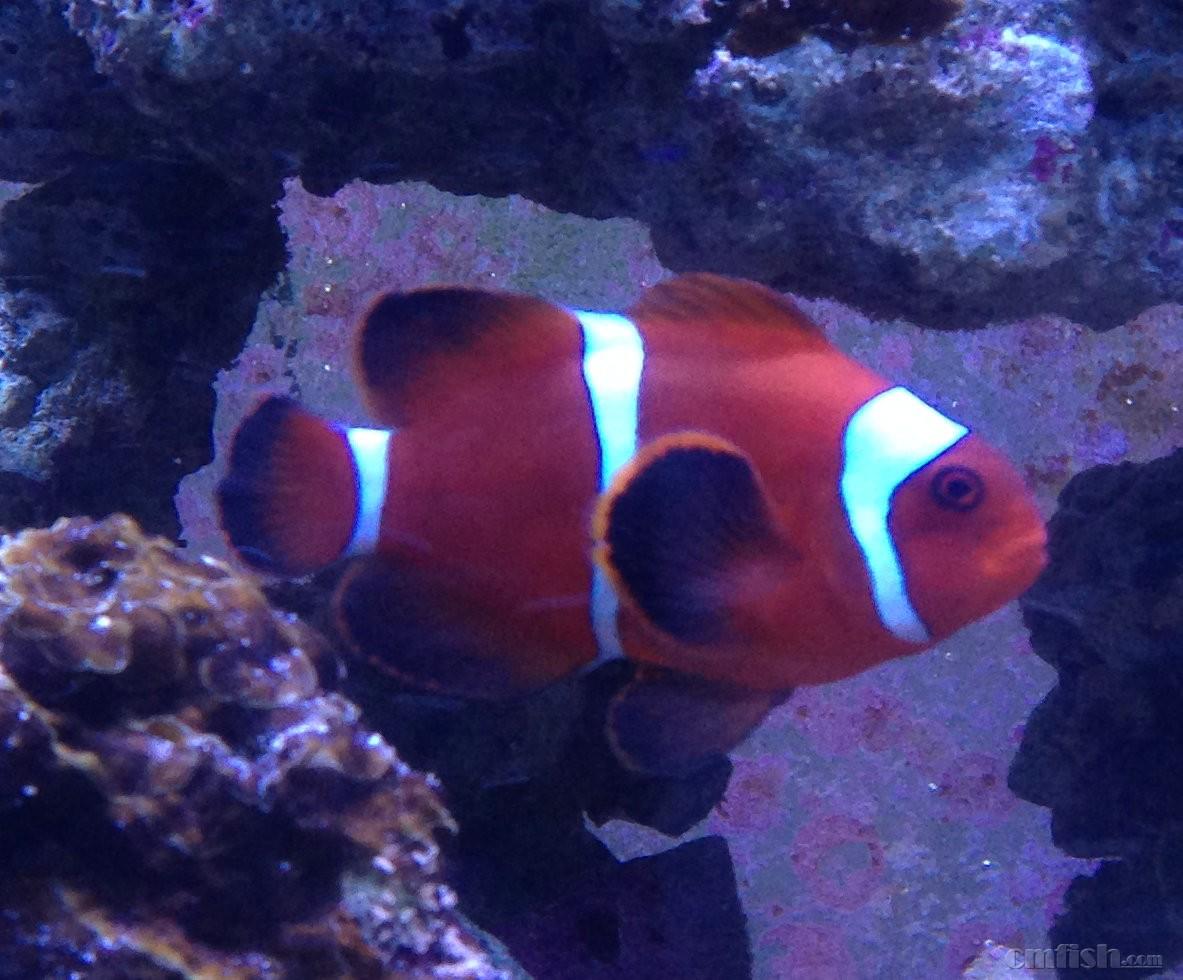 壁纸 动物 海底 海底世界 海洋馆 水族馆 鱼 鱼类 1183_980