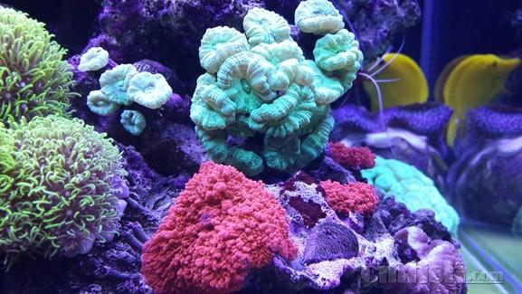 壁纸 海底 海底世界 海洋馆 水族馆 577_325