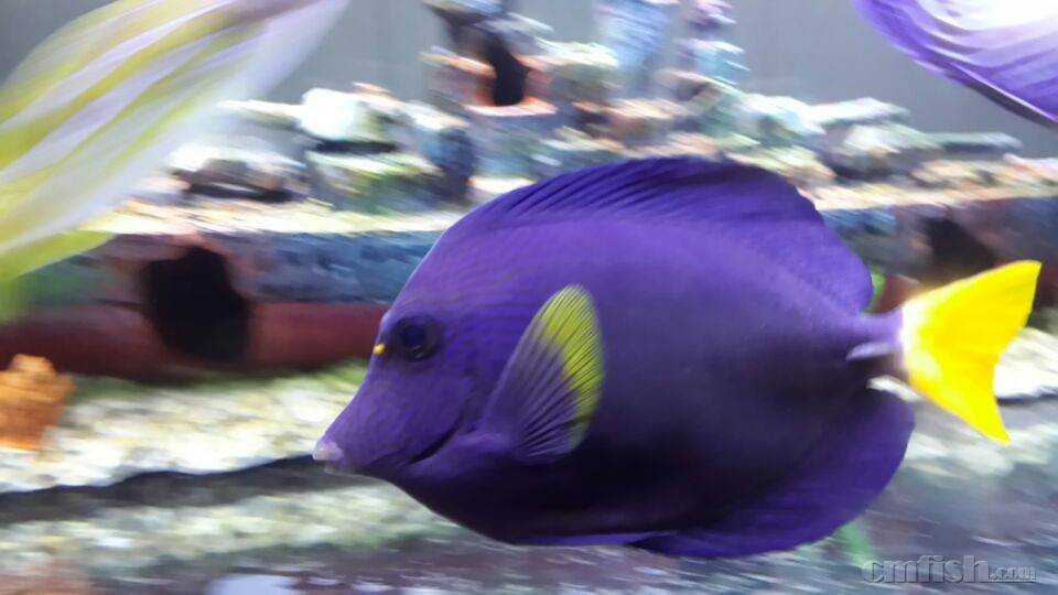 壁纸 动物 海底 海底世界 海洋馆 水族馆 鱼 鱼类 960_540