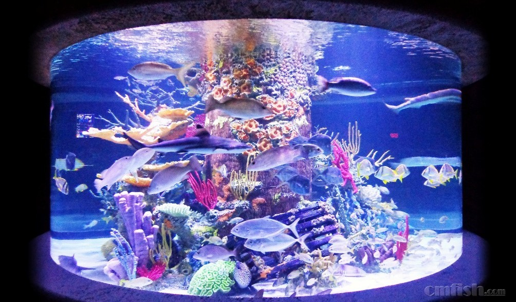 大型圆柱形鱼缸用什么材质啊