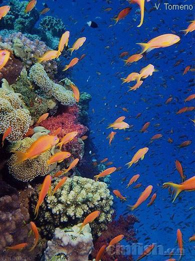 壁纸 海底 海底世界 海洋馆 水族馆 390_520 竖版 竖屏 手机