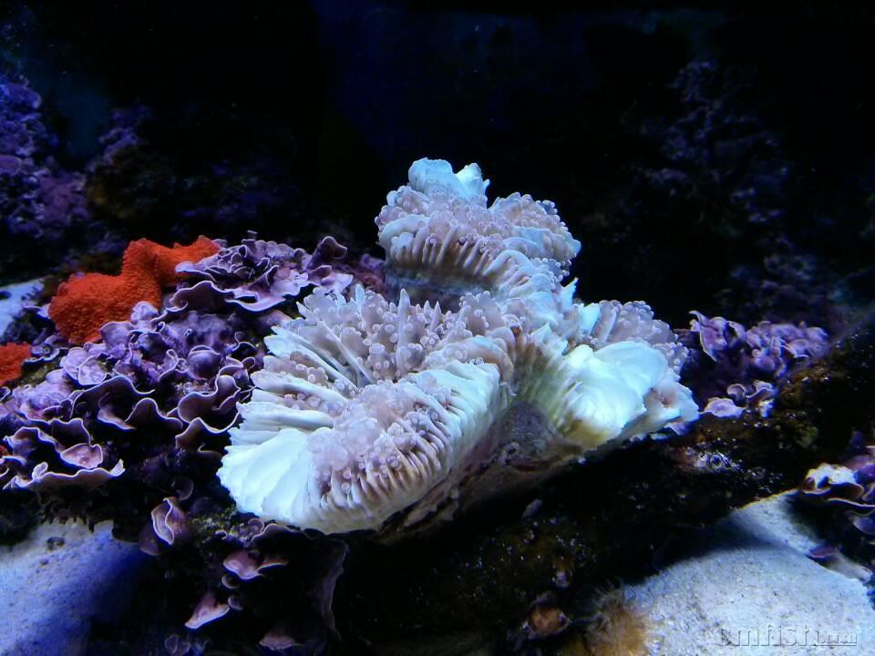 珍珠泥做海底动物