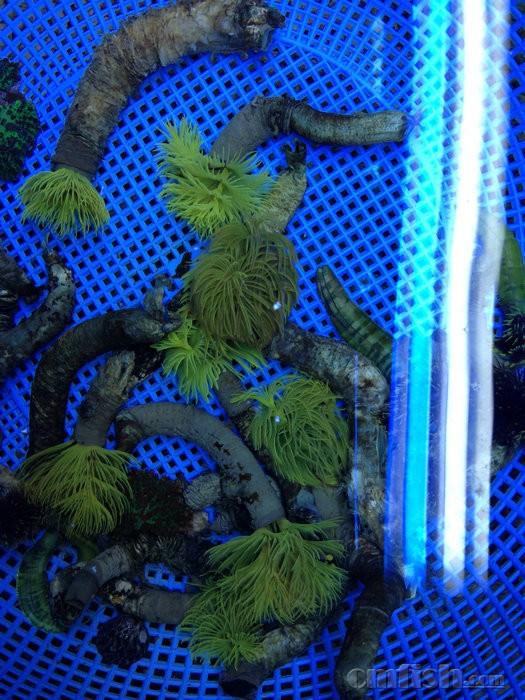 壁纸 海底 海底世界 海洋馆 水族馆 525_700 竖版 竖屏 手机
