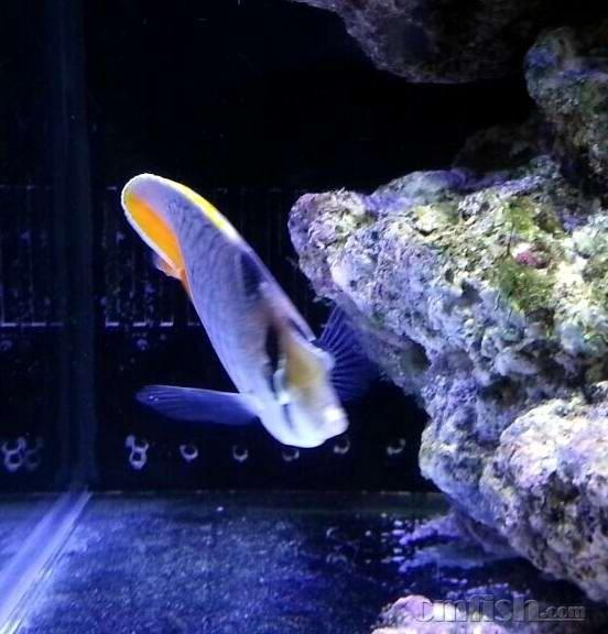 壁纸 动物 海底 海底世界 海洋馆 水族馆 鱼 鱼类 552_576