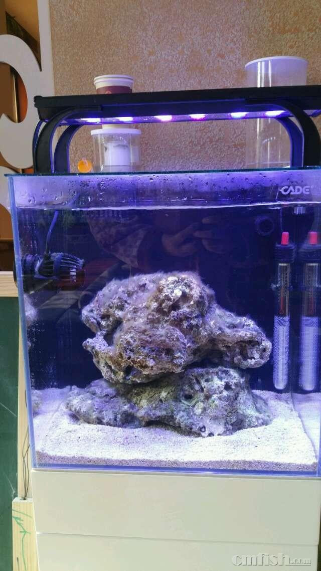 40背滤,刷缸造景 - 彩鲽专业海水鱼缸