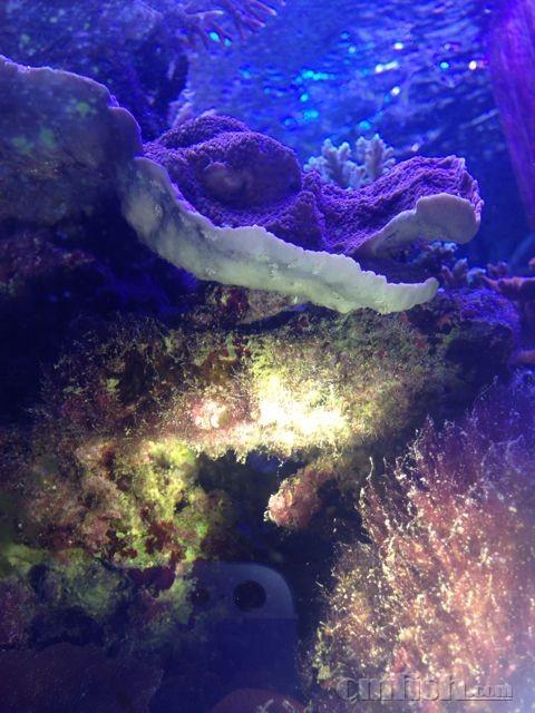 壁纸 海底 海底世界 海洋馆 水族馆 480_640 竖版 竖屏 手机
