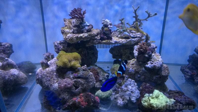 壁纸 海底 海底世界 海洋馆 水族馆 桌面 800_451