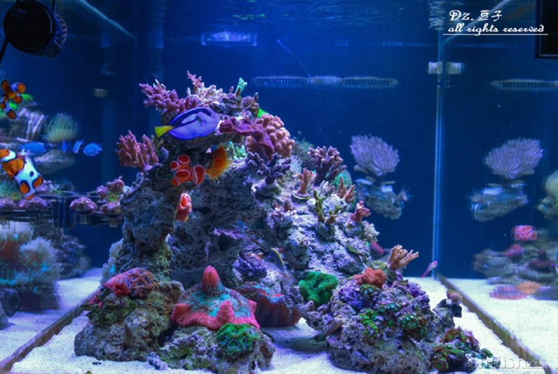 壁纸 海底 海底世界 海洋馆 水族馆 1100_738