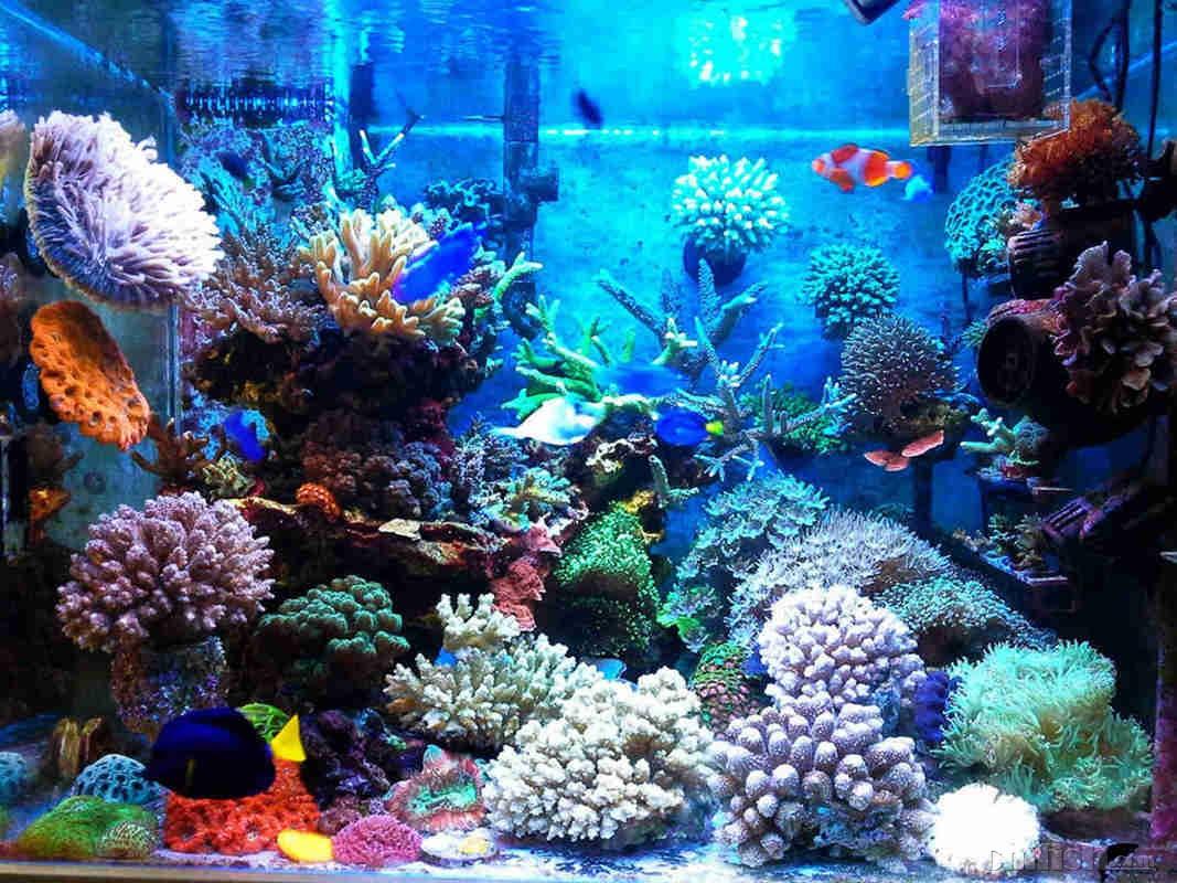 壁纸 海底 海底世界 海洋馆 水族馆 1067_800