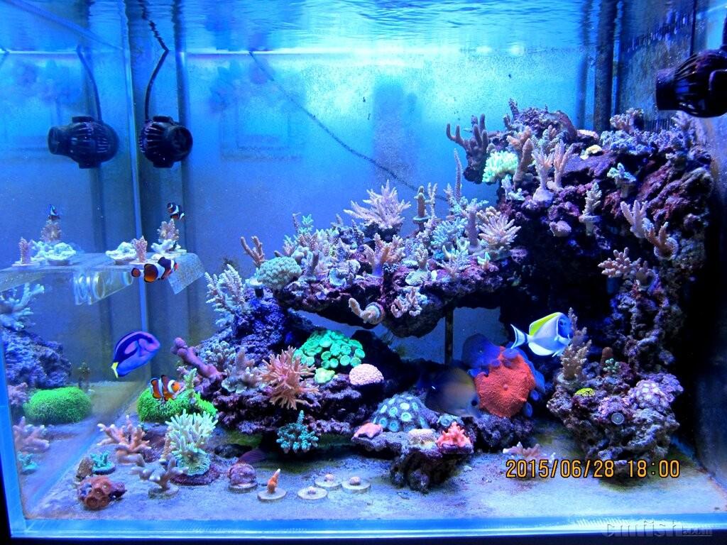壁纸 海底 海底世界 海洋馆 水族馆 1024_768