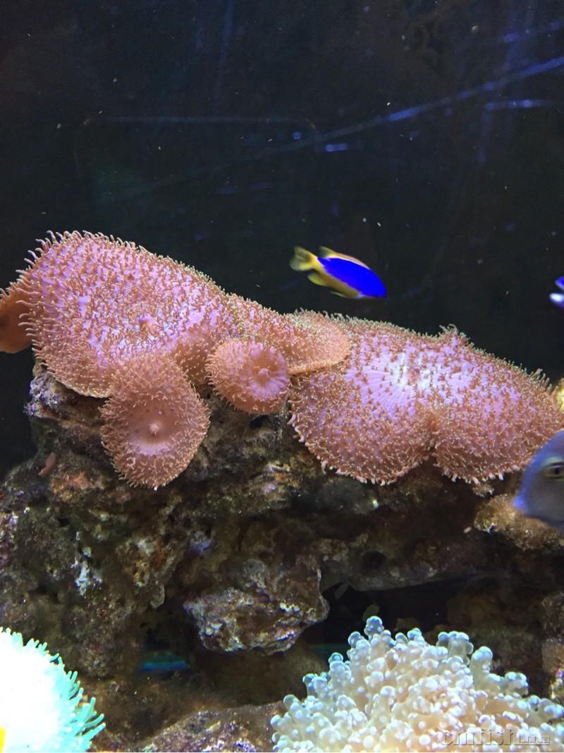 壁纸 动物 海底 海底世界 海洋馆 水族馆 鱼 鱼类 800_1068 竖版 竖屏