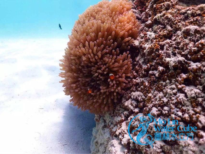 可以想象,一种生命形态(珊瑚,海葵,藻,海绵,细菌)可以在封闭环境中