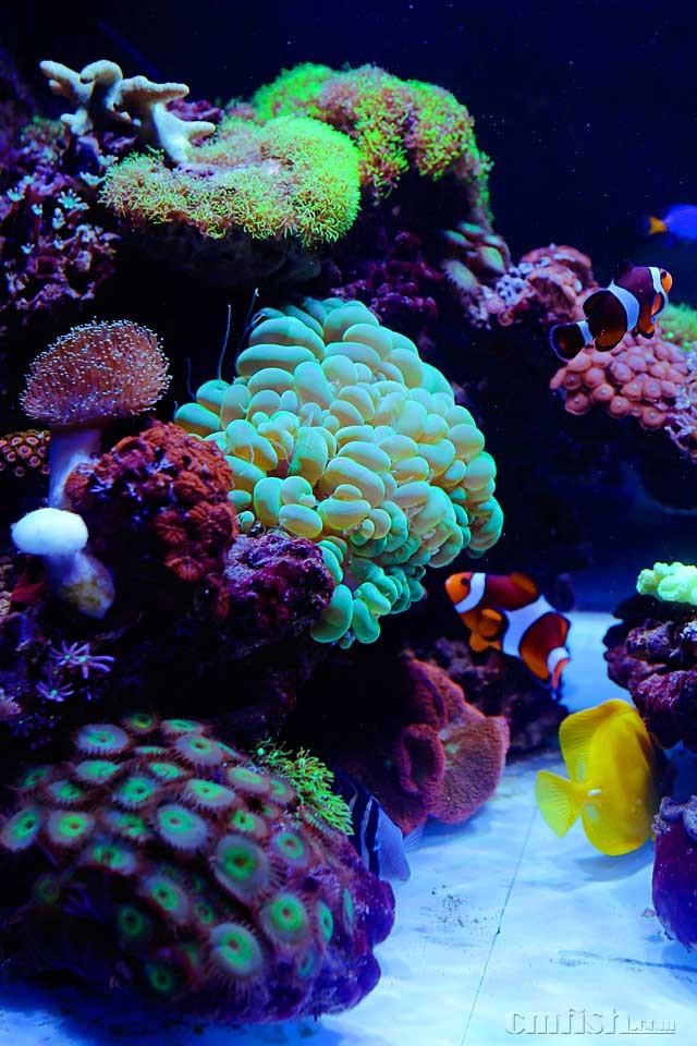 壁纸 海底 海底世界 海洋馆 水族馆 640_960 竖版 竖屏 手机