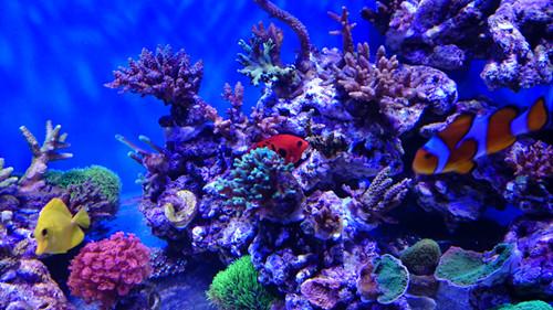 壁纸 海底 海底世界 海洋馆 水族馆 桌面 500_281