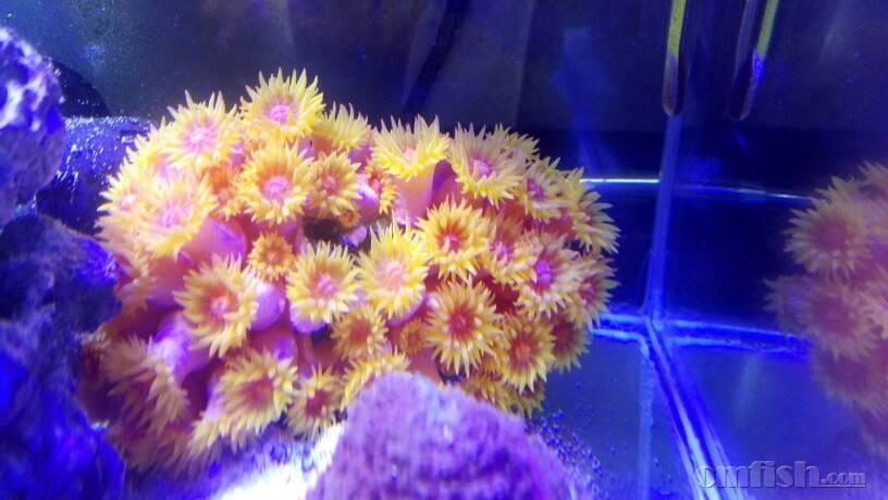 可爱的太阳花