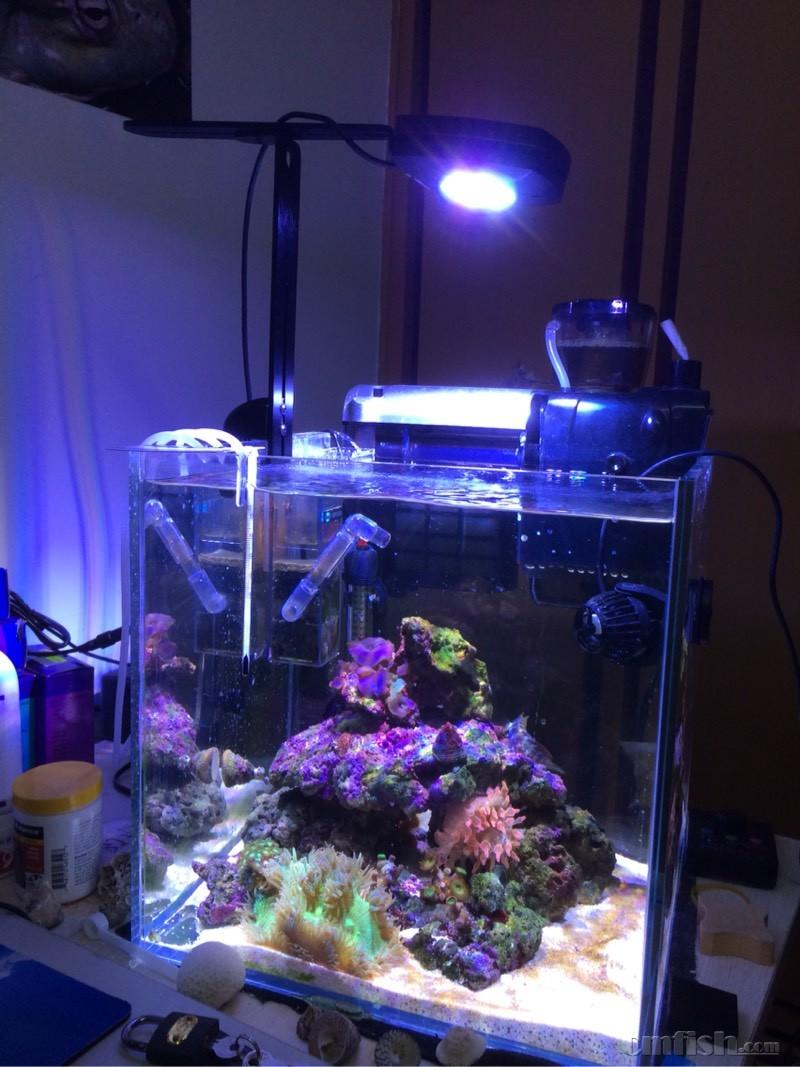 求ai prime灯35小方缸的sps光谱图。