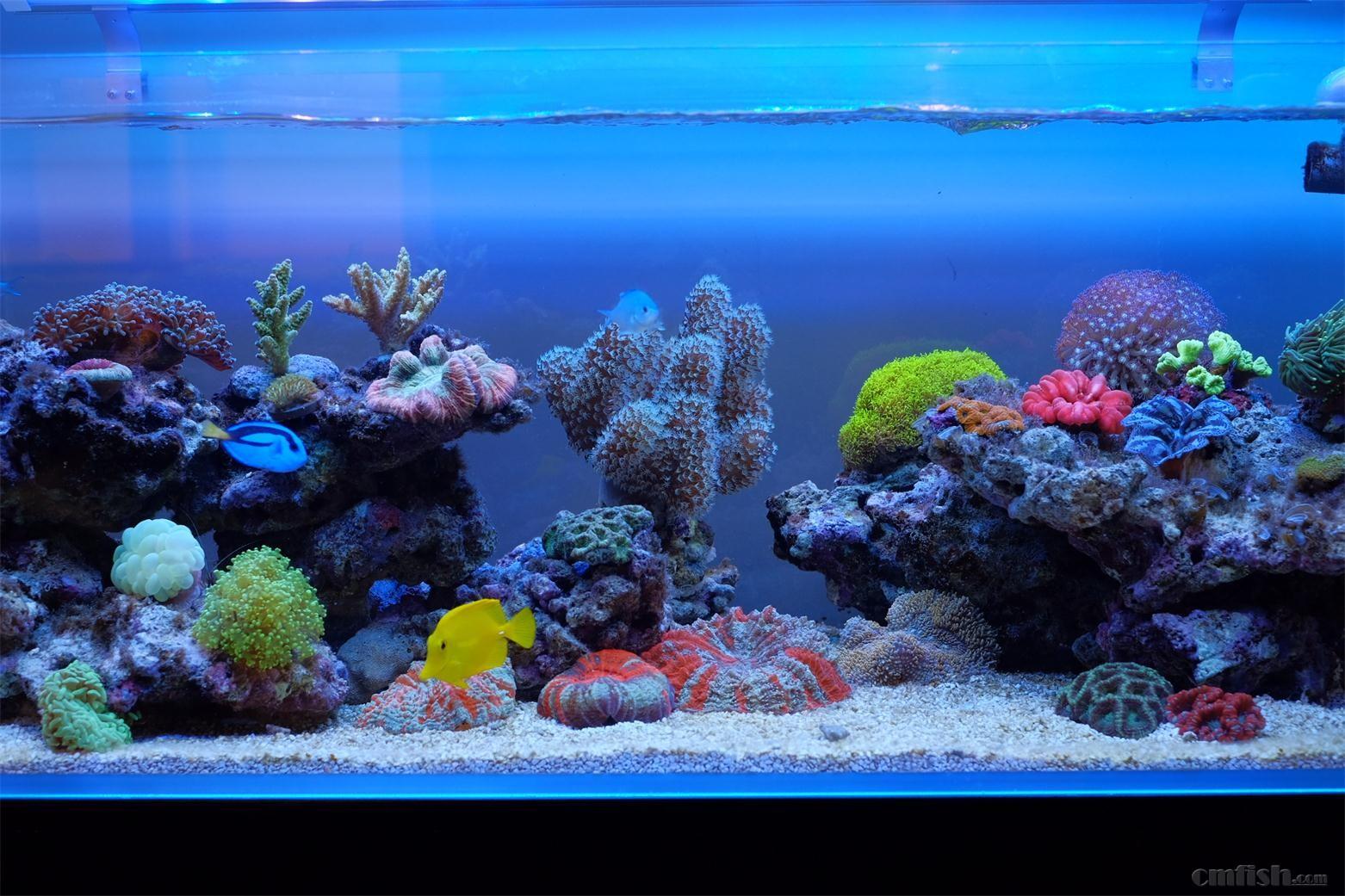壁纸 海底 海底世界 海洋馆 水草 水生植物 水族馆 1562_1041