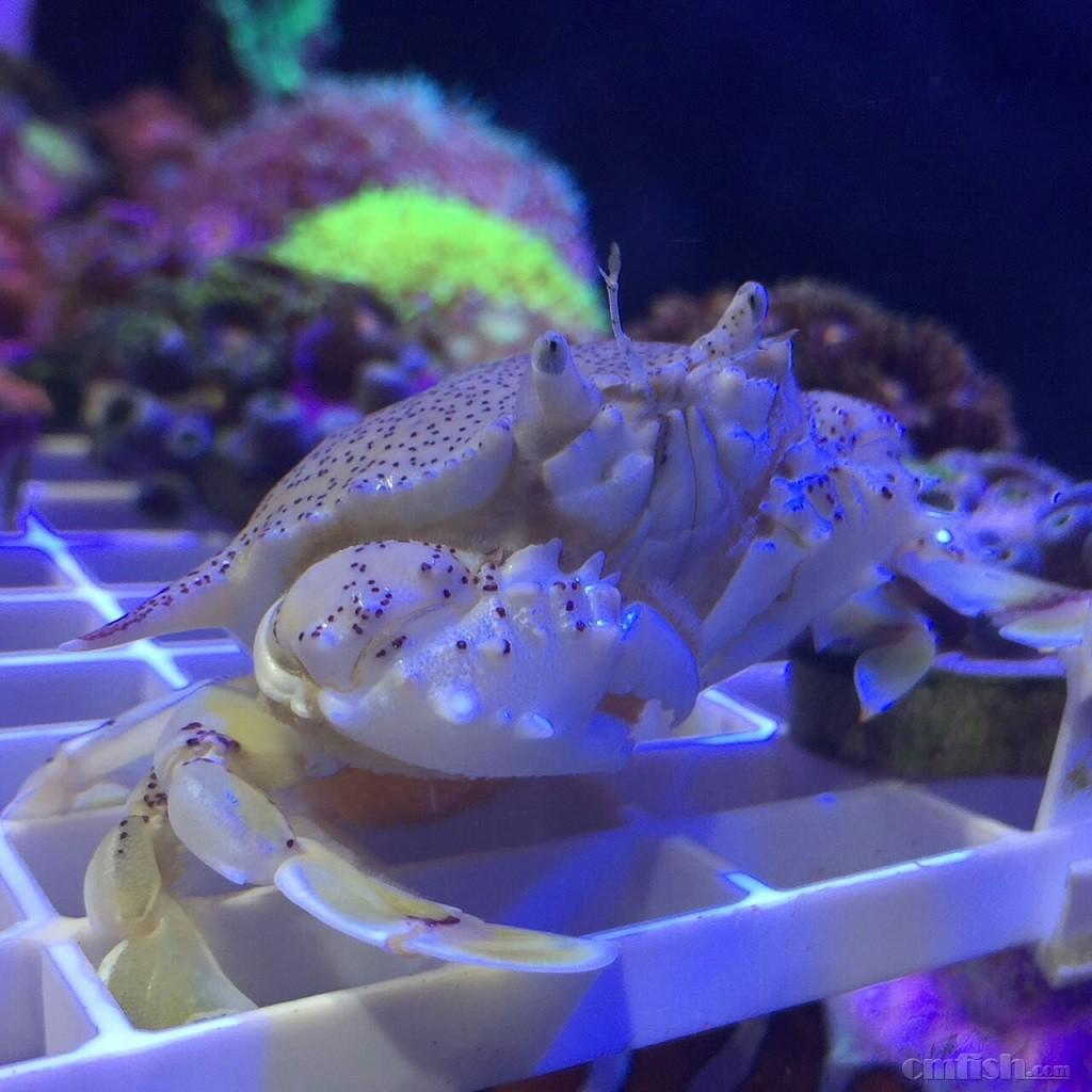 壁纸 海底 海底世界 海洋馆 水族馆 1024_1024图片