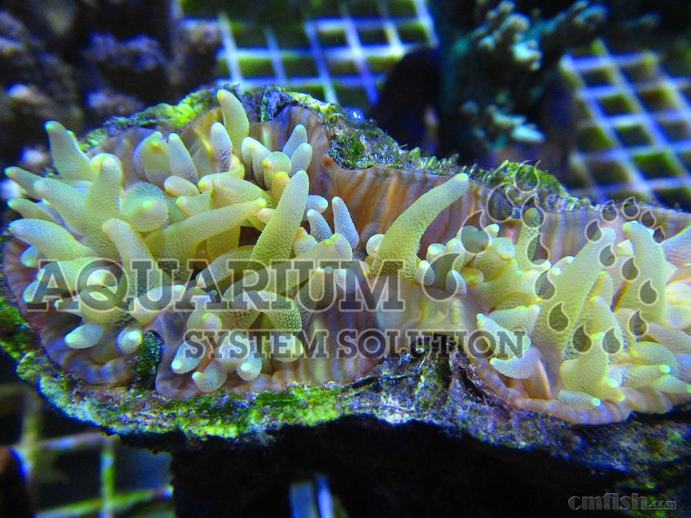 壁纸 海底 海底世界 海洋馆 水族馆 1000_750