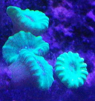 那些好看又好养的珊瑚 - 初学者(Beginners) - C