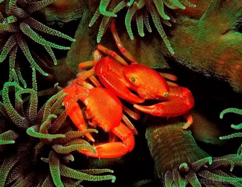 【余溪之海】海缸共生生物大全:管虫还能揍海星?