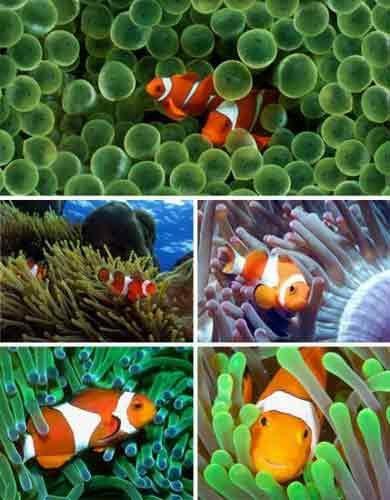 比如:桡脚类的,等脚类的动物和浮游动物等.