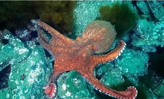 而海绵动物,腔肠动物等,其身体上有大量的小孔作为通道,也不会因此而