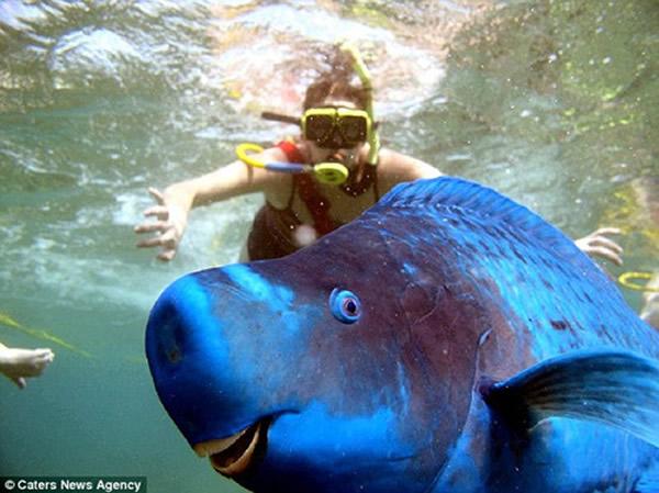 基韦斯特岛鹦鹉鱼抢镜