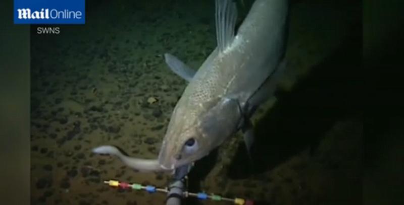 马里亚纳海沟8000米新物种