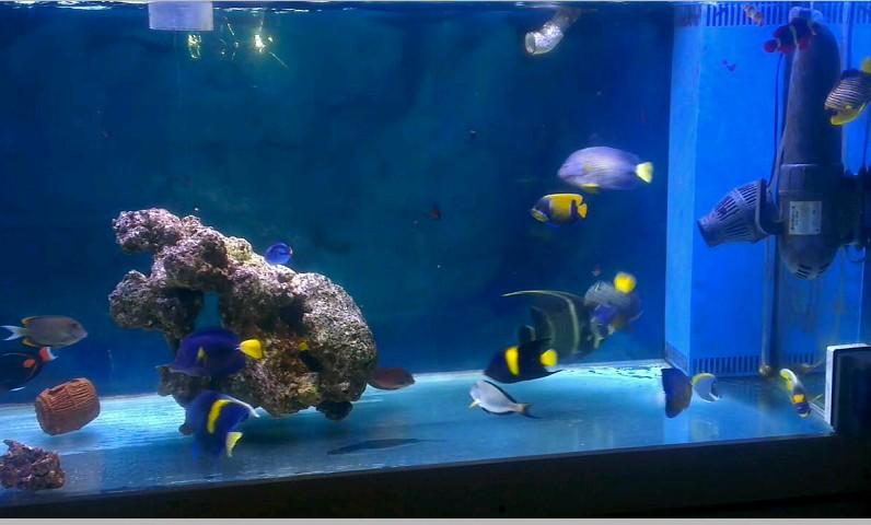 1.8米FOT我的鱼缸日子 - 纯鱼缸(Fish Only Tan