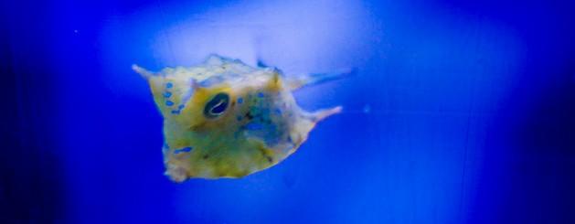 壁纸 动物 海底 海底世界 海洋馆 水族馆 鱼 鱼类 629_245