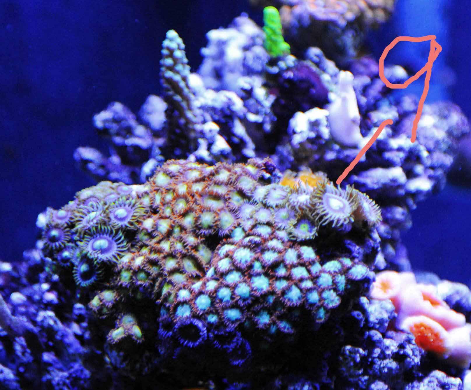 壁纸 海底 海底世界 海洋馆 水族馆 1616_1340