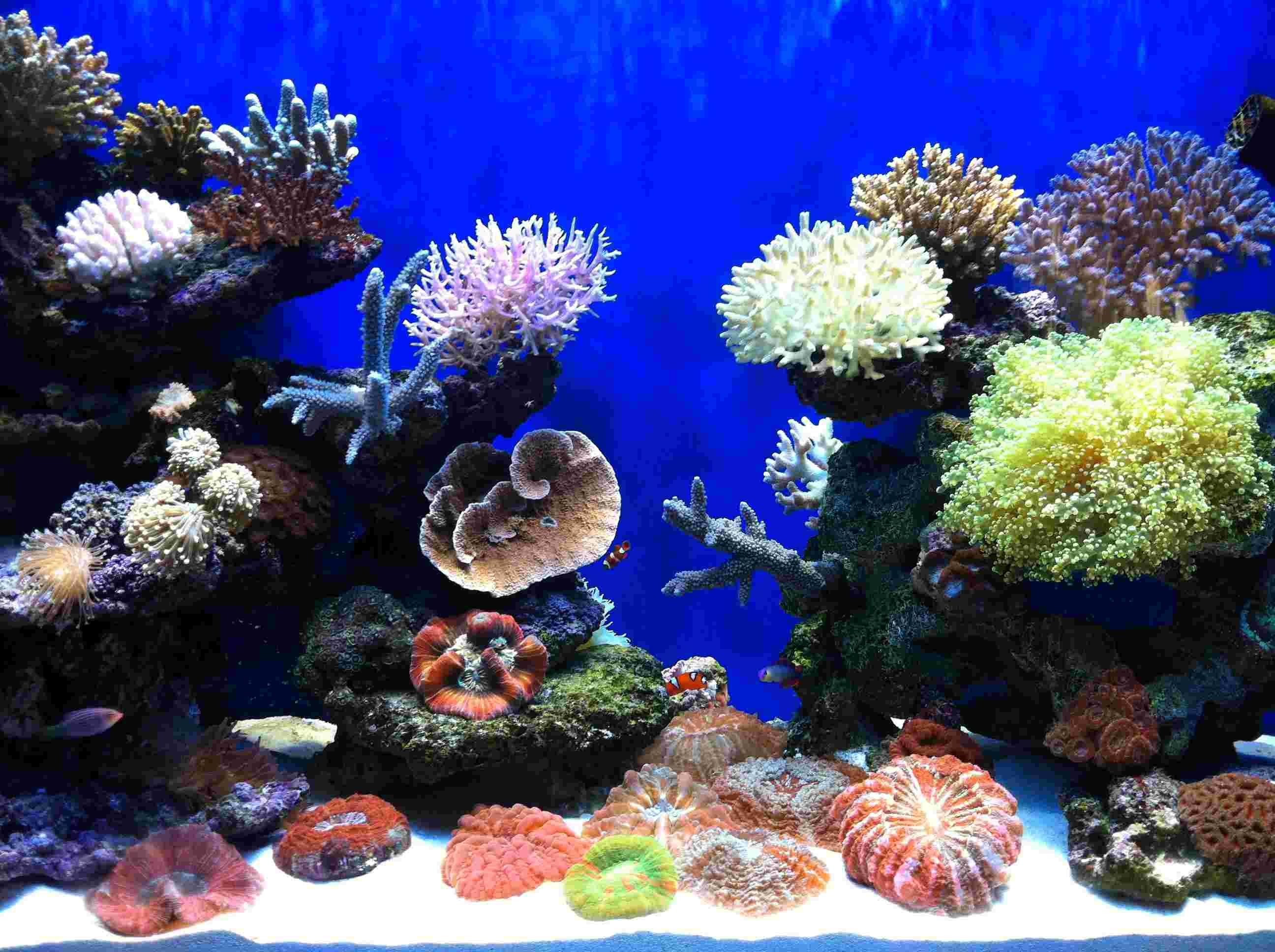 我的幻彩海世界 - 硬珊瑚礁岩生态缸(sps reef tank)