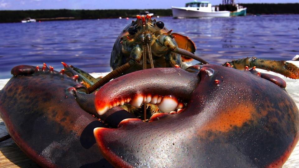无脊椎动物 - cmf海水观赏鱼论坛