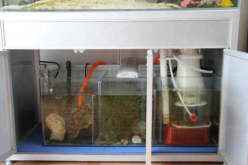 咨询底缸问题 - 彩鲽专业海水鱼缸