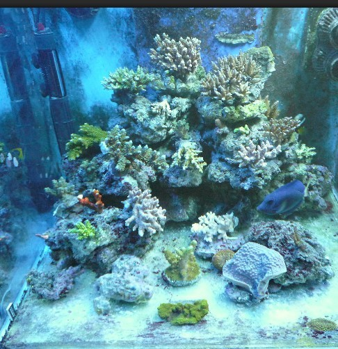 壁纸 海底 海底世界 海洋馆 水族馆 486_502