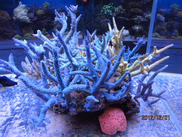 珊瑚礁简笔画大全||儿童简笔画大全||简笔画图片大全