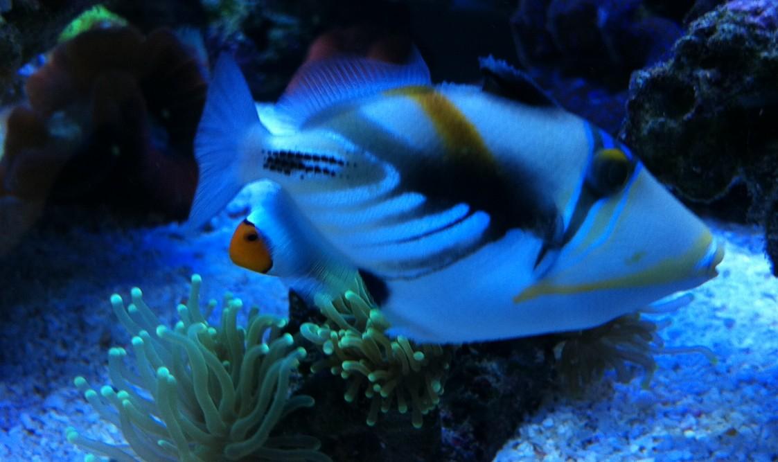 壁纸 动物 海底 海底世界 海洋馆 水族馆 鱼 鱼类 1123_667
