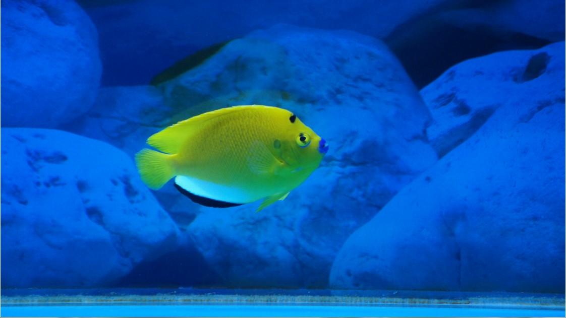 壁纸 动物 海底 海底世界 海洋馆 水族馆 鱼 鱼类 1122_631