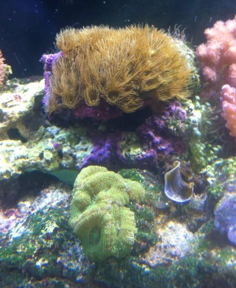 壁纸 海底 海底世界 海洋馆 水族馆 476_581