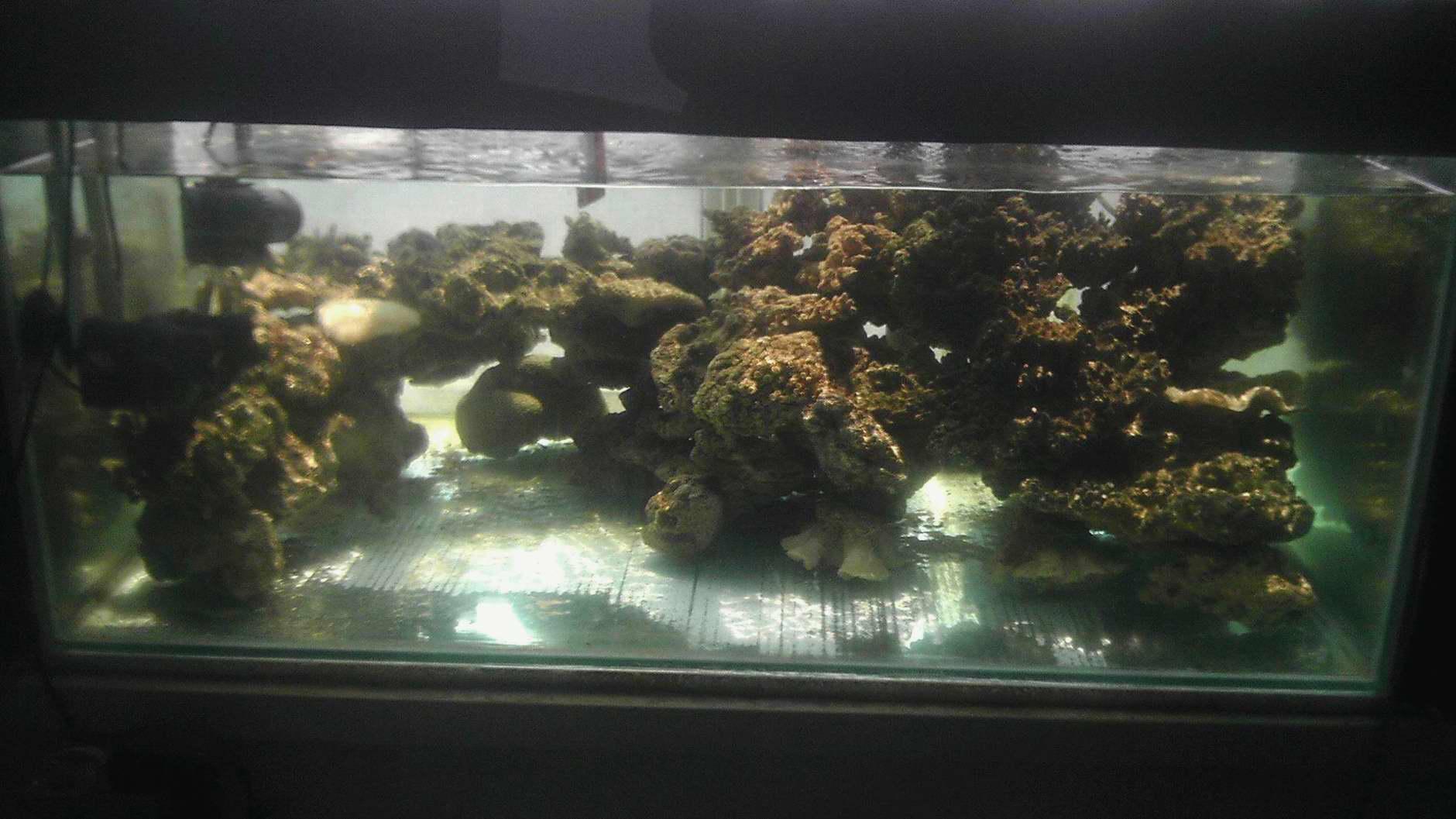 太原木子鱼的纯阳光柏林加ats缸