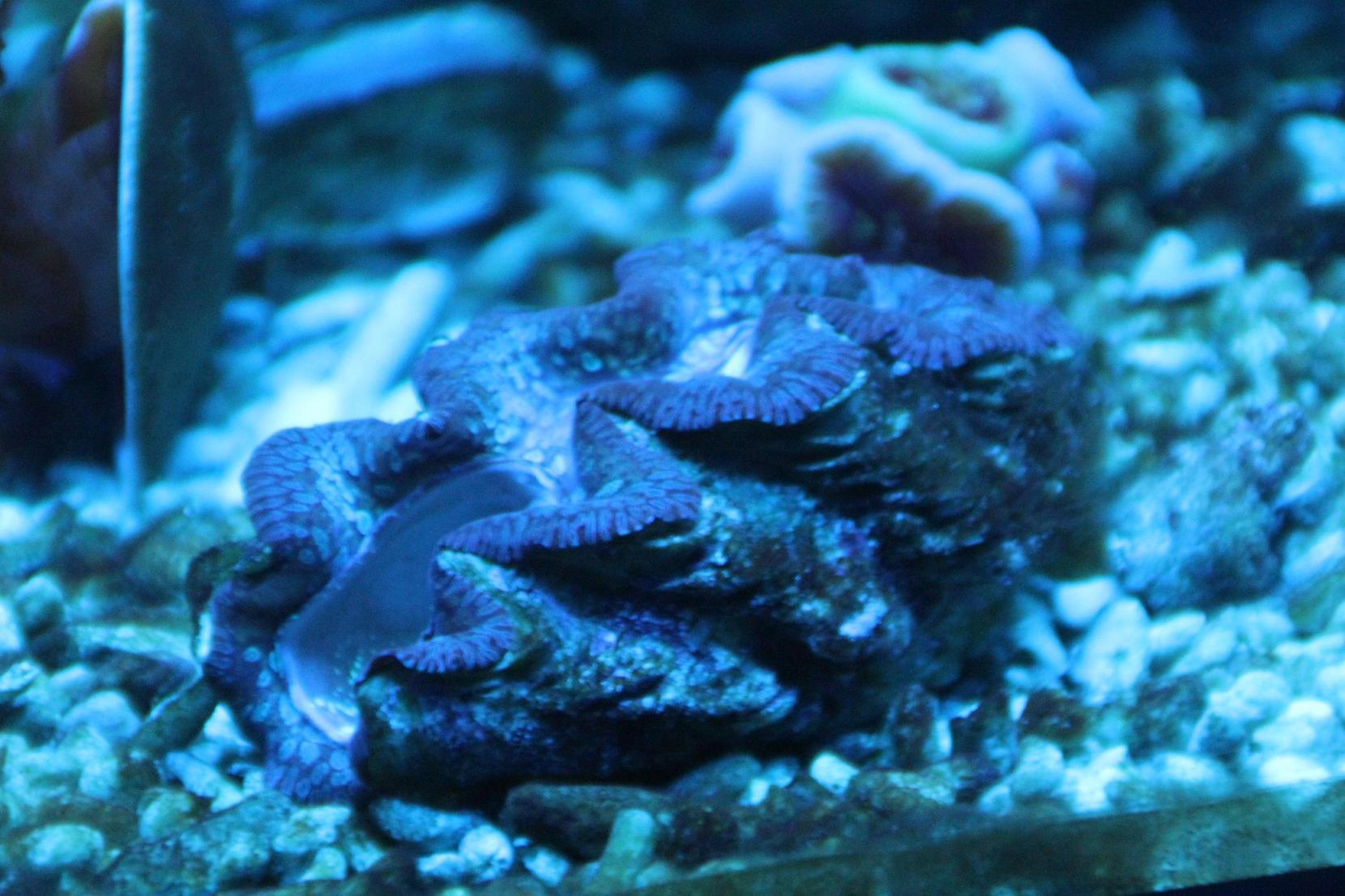 壁纸 海底 海底世界 海洋馆 水族馆 桌面 1660_1107