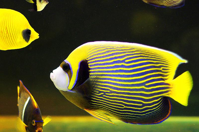 身上有花纹的鱼图片