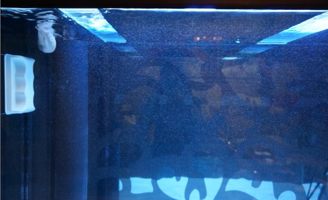 壁纸 海底 海底世界 海洋馆 水族馆 1060_647